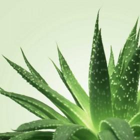 lubrifiant Nu Aloe Vera 150ml MIxgliss